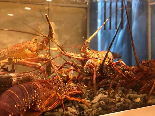 伊勢海老、オマール海老、活鮑などの新鮮魚介も旬の素材をご用意しています