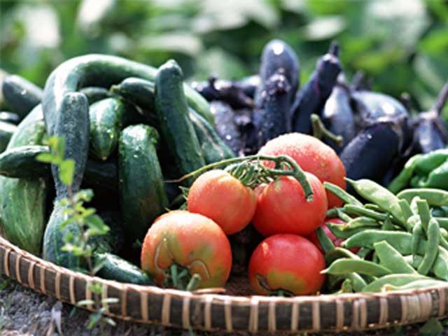 季節ごとに新鮮な食材を仕入れております。