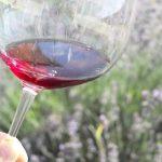 """""""自然派ワイン""""の基礎知識【前編・2020年版】ナチュラルワイン、オーガニックワインからビオディナミ、リュットレゾネまで"""