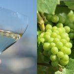 ワイン選びのヒント!世界の「シャルドネ」を飲み比べてみよう ~ワインの基礎知識・白ワイン代表品種~
