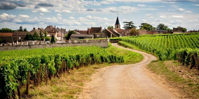 ブドウ畑とワイナリー