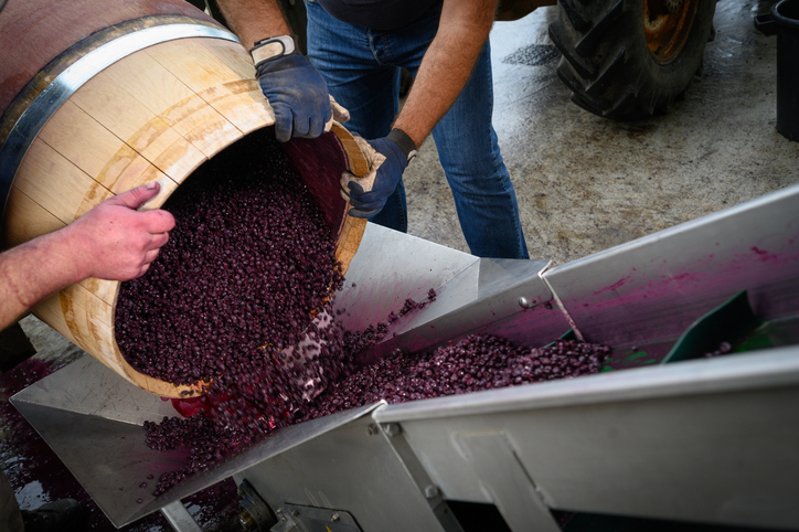 ワインを造っている工程
