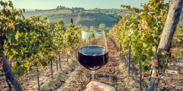 ブドウ畑でワイングラスを掲げる様子