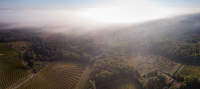 霧がかかるソルテーヌ地方のブドウ畑