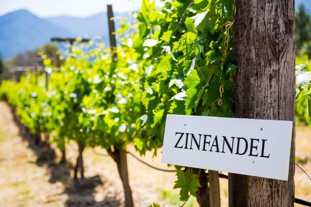 ジンファンデルの看板があるブドウ畑