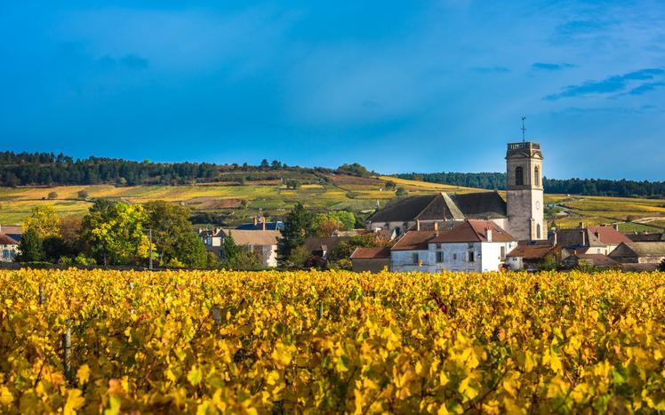 ブルゴーニュ地方ワイン畑
