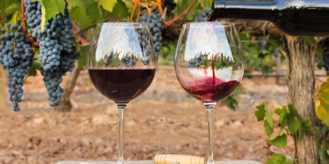 ブドウ畑のテーブルに置かれたワイングラスに、赤ワインを注いでいる様子