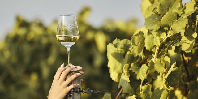 ぶどう畑で白ワイングラスを持つ人