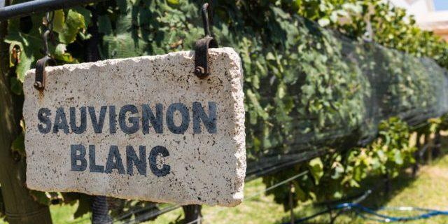 ソーヴィニヨン・ブランの看板がブドウ畑に立っている